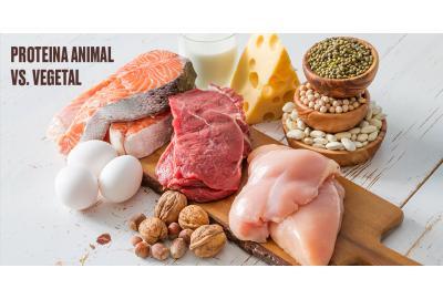 DIFERENCIA ENTRE LA PROTEÍNA ANIMAL Y VEGETAL